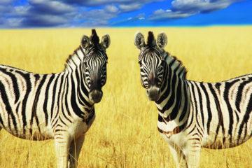 Mombasa Tsavo Safari