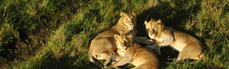 Nairobi National Park Day Tour