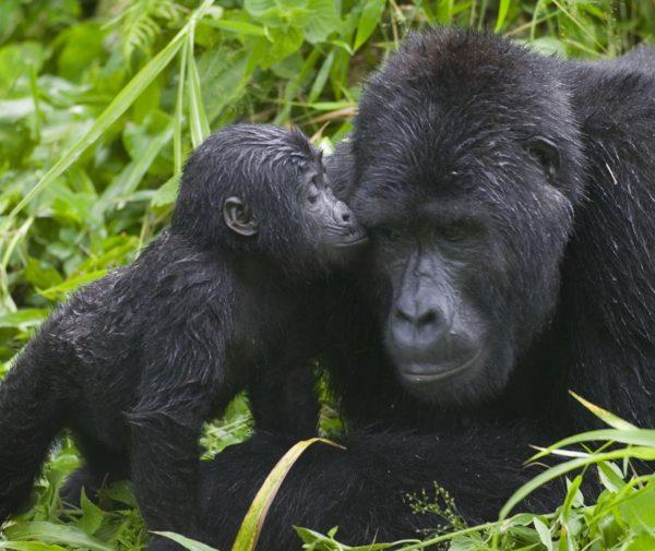 uganda safari package