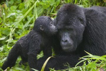 uganda safari package