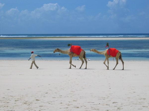 mombasa nairobi safari